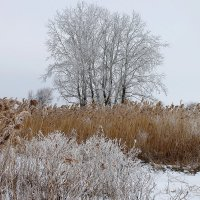 Просто зима.. :: ЕВГЕНИЯ
