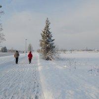 зимняя прогулка :: linnud