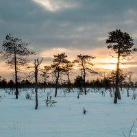 Закат над болотом :: Яна Старковская