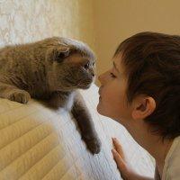 Кошки - очарование моё. :: Anna Ozero