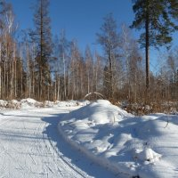 Зимой в лесу :: Галина