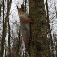 Где мой завтрак? :: Инна Щелокова