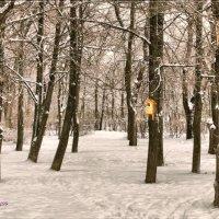В парке. :: Anatol Livtsov