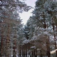 Зимний лес :: Николай Масляев