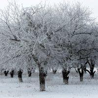 Зимний сад, зимний сад, белым сном деревья спят... ( Глызин.) :: Валентина ツ ღ✿ღ