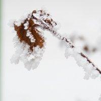 Снежные узоры :: Вера Бережная
