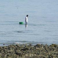 Собирает моллюсков :: Kristina Suvorova