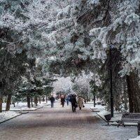 Утренний иней :: Сергей Шруба