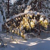 Зимы простуженные ветви... :: Лесо-Вед (Баранов)