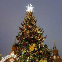 Московские ёлки. :: Елена