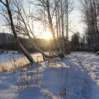 Зимний закат :: Лариса