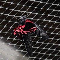 Бабочка. :: Маргарита ( Марта ) Дрожжина