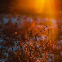 Луч солнца золотого... :: Ёжик в тумане