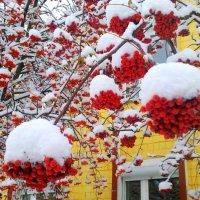 первый снег октября 2016г. :: Александр Прокудин