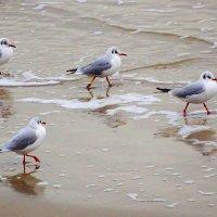 Бегущие по песку... :: Маргарита Батырева