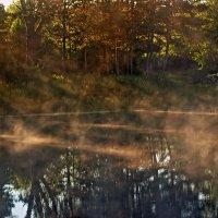 Лесной пруд :: Олег Резенов