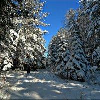 В зимнем лесу :: Leonid Rutov