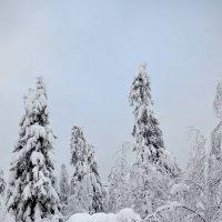 зима 7 :: Константин Трапезников