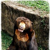 Медведь :: Alexander Dementev