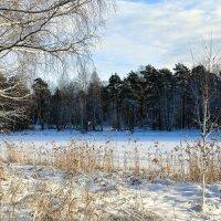 Смоленщина в январе :: Милешкин Владимир Алексеевич
