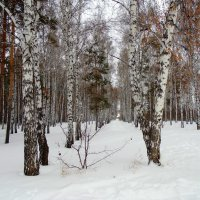 "Серия "" Зима "" № 4 :: Мила Бовкун"