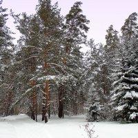 "Серия "" Зима "" №5 Счастливого Рождества ! :: Мила Бовкун"