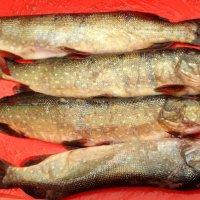 Зимняя рыбалка – дело настоящих мужчин! :: Андрей Заломленков