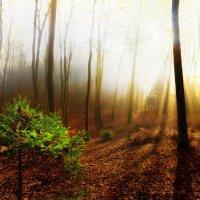 Ёлочка в лесу :: Sven Rok