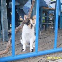 Критские кошки :: Светлана