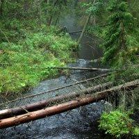 Переправа на лесной речке :: Наталья