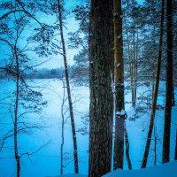 лес в тиши :: Ирина