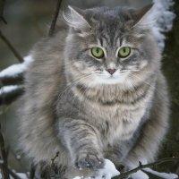 Зимняя прогулка по деревьям :: Ирина Приходько