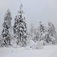зима 8 :: Константин Трапезников
