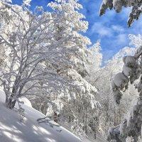Снежное царство-государство :: Светлана Игнатьева