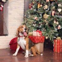 Мое собачье альтер-эго :: Тата Казакова