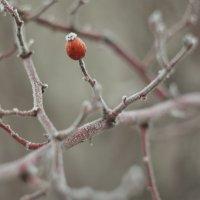 Один зимой :: Сергей Терещенко