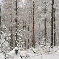 Кучерявая Зима. :: Сергей Адигамов