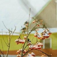 стайка птиц за обедом :: petyxov петухов