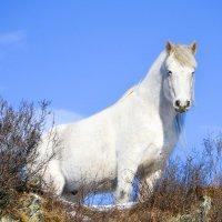 White young horse :: Николай Воробьёв