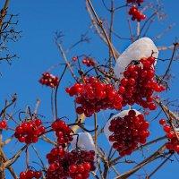 ...  на  Рождество! :: Александр Кудров