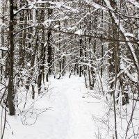 Зимний лес :: Руслан Лутов
