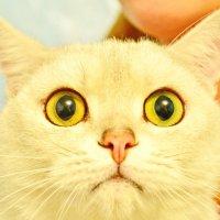 Портрет кота Коржика. :: Марина Никулина
