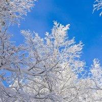 Мороз и солнце! :: Светлана Игнатьева
