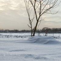 Одинокое дерево :: Руслан Лутов
