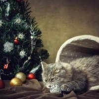 Из серии Новогодние истории :: Ирина Приходько