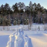 По следам снегохода... :: Анатолий Анищик