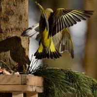 воздушный бой :: linnud