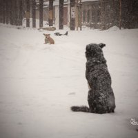 Вот и зима :: Юрий Филоненко