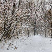 Зимний парк :: andrey