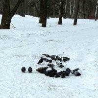 Птицы зимой :: alemigun
